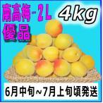 南高梅優品2L-4kg梅干・梅酒・他、有機肥料使用/紀州和歌山県産青梅