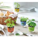 ハーブ栽培セット フレッシュハーブ  底面給水   花、ガーデニング   種、種子  栽培キット  ハーブ