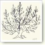 アンリ・マティス 茂み, 1951年 Henri Matisse: Le Buisson II【アートポスター】