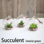 ミニ多肉植物 3種セットB / 光触媒を超える消臭効果 人工観葉植物 造花
