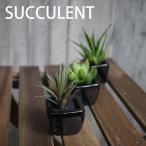 ミニ多肉植物3種セットA ブラックポット 消臭効果 造花 フェイクグリーン 多肉植物 造花 無光触媒 CT触媒加工済み 造花 人工観葉植物 多肉植物