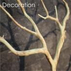 マンザニータ(L)/ディスプレイアイテム (別途料金で、無光触媒/CT触媒加工可)止まり木