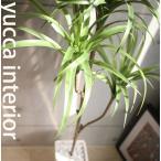ユッカツリー(幸せを呼ぶ青年の木)130cmシンプルな陶器のブラックポット / 消臭・除菌・光触媒を超える効果のCT触媒(無光触媒)加工済み