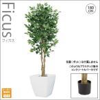 人工観葉植物/180cmナチュラルフィカスツリー/インテリアグリーン/造花 (別途料金で、無光触媒/CT触媒加工可)