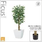人工観葉植物/ナチュラルフィカスツリー120cm/インテリアグリーン/造花 (別途料金で、無光触媒/CT触媒加工可)