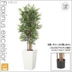人工観葉植物/トネリコツリー 150cm/インテリアグリーン/造花 (別途料金で、無光触媒/CT触媒加工可)送料無料