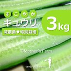 キュウリ 農薬90%カット 特別栽培【3kg】