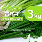青ネギ ねぎ 農薬90%カット 特別栽培【3kg】