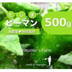 ピーマン 農薬90%カット 特別栽培【500g】