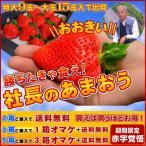 【2箱以上で送料無料】勝ちたきゃ食え!「社長のあまおう特大9から15玉入」特大の苺(いちご)あまおうイチゴ