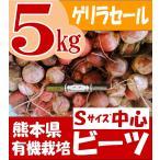 (ゲリラセール)ワケあり 有機栽培 ビーツ 熊本県産 Sサイズ中心 5kg 限定品