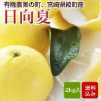日向夏 2kg  宮崎県綾町産 ニューサマーオレンジ 特別栽培  ギフト