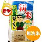 新米 5kg 鹿児島コシヒカリ 5kg 無洗米 令和元年産 こしひかり