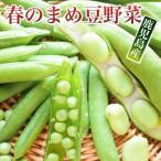 春野菜セット まめ豆野菜 5種類入 そらまめ  スナップエンドウ 菜の花