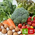 野菜セット 卵付き 九州野菜10品以上 朝どれタマゴ10個入