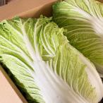 白菜 3-4玉 大玉 はくさい 福岡県産