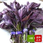 赤しそ 葉 1kg  4束 朝採り赤紫蘇 福岡産 産地直送
