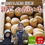 じゃがいも 10kg  出島 新ジャガイモ 長崎県産