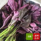 赤しそ 葉 赤紫蘇 2kg 8束 梅干し用 ジュース用 福岡産