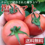 塩トマト フルーツトマト 熊本県八代産 卒園祝 入園祝 内祝 ギフト