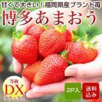 いちご 博多あまおう イチゴ 大粒 2パック入箱 苺 贈り物 福岡県産