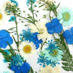 【1パック】押し花セット I ブルー系  / 資材 素材 アクセサリー パーツ 材料 ハンドメイド 卸 問屋 手芸
