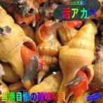 活アカベ貝1kg かい カイ 貝