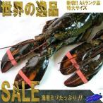 特大生オマール1匹400〜450g(活冷凍) おまーる ろぶすたー ロブスター えび 海老 エビ