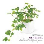 KISHIMA キシマ アイビー 消臭アーティフィシャルグリーン KH-60852 鉢タイプ IVY CT触媒加工 抗菌 防汚 消臭 造花 人工 観葉植物