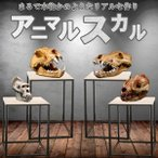 アニマルスカル 超リアル 骨 骸骨 化石 展示 インテリア 動物 パンダ オオカミ 犬 オランウータン レプリカ ANISUKA