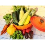 4月の毎週火曜日出荷 虹色畑の旬野菜セット(全4回)
