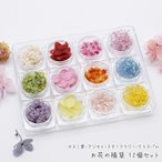【10%OFF】カスミ草・アジサイ・スターフラワー・クリスパム お花の福袋 12個セット