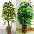 インテリアグリーン フェイクグリーン 人工観葉植物 【観葉植物 ベンジャミン/観音竹】/同梱不可・代引き不可