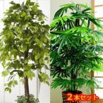 グリーンインテリア 大型観葉植物 造花 【観葉植物 ベンジャミン&観音竹セット】/同梱不可・代引き不可