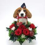 クリスマス限定 プリザーブドフラワーアレンジ ビーグル犬