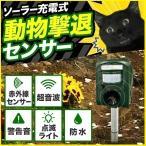 動物撃退器 超音波 ソーラー 猫よけ 忌避 猫 害獣 害鳥 動物 対策 駆除 センサー ライト USB 音 電池 ネコ カラス 超音波動物撃退器 被害