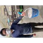 バケツ牡蠣/生食用約2.5キロ前後 お買い得/期間限定 北海道仙鳳趾/老者舞/訳あり
