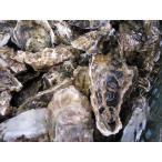牡蠣70個前後4キロ(訳あり ハネモノ)厚岸西岸 仙鳳趾 生牡蠣(かき)(殻付き 生食)/牡蛎