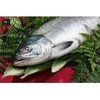 北海道産(鮭)生 秋鮭 オスメス無判別 3.0キロ〜3.7キロ/定置物/鮮度維持急速冷凍
