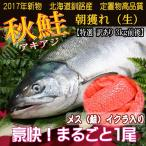 訳あり(特選)北海道(鮭)生 秋鮭 メス 生筋子 3.0キロ~3.5キロ 加工無し