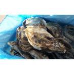 北海道/知内町産/生食用牡蠣(かき)(殻付き 生食)牡蠣/牡蛎/Mサイズ15個 /80〜120g前後