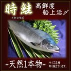北海道 時鮭(さけ)時不知【トキシラズ】生【姿】高鮮度 船上活〆 3.1〜3.5kg