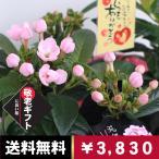 敬老の日 生花 花 ギフト プレゼント 鉢花 送料無料 おじいちゃん おばあちゃん いつまでのお元気で におい桜