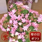 2019 母の日 花 人気  ギフト プレゼント 送料無料 アジサイ 鉢 ダンスパーティ 5号鉢