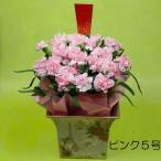 母の日 鉢ギフト クオリティカーネーション ピンク(5号鉢)送料無料