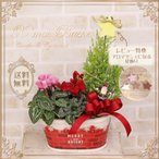 送料無料 クリスマス 寄せカゴ クリスマスツリー クリスマスギフト プレゼント ギフト シクラメン コニファー クリスマス バスケット