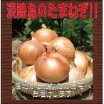 蔬菜 - 【自宅用♪】淡路島玉ねぎ 訳あり10kg 【送料無料】玉ねぎの本場、淡路島から産地直送♪