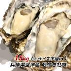 朝採れ 牡蠣 訳あり 殻付き牡蠣 15kg カキ かき 兵庫県 御津産 室津産 加熱用 バーベキュー 牡蠣フライ 牡蠣鍋 取り寄せ 産地直送 送料無料