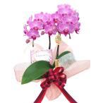 ミディ胡蝶蘭/誕生日お祝いセット(ギフト包装/メッセージカード付き)チュンリー 2本立ち(こちょうらん)開店祝い/開業祝い ギフト/プレゼント