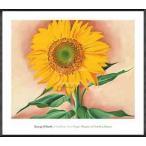 ポスター アート Sunflower from Maggie 1937(ジョージア オキーフ) 額装品 アルミ製ハイグレードフレーム
